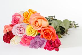 dozen rose bouquet
